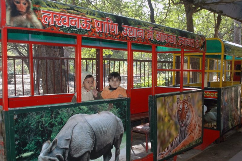 Baby Train At Lucknow Zoo