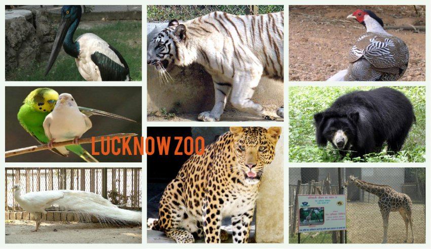 Animals in Lucknow Zoo