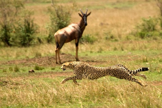 Mrigavani Wildlife Park